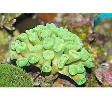 Beautiful coral Photographic Print