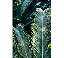 Palm Tree Leaves Photographic Print