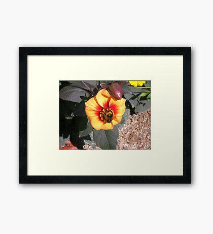 BUMBLE Framed Print