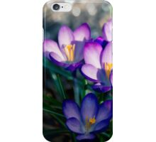 Crocus is the present of spring. iPhone Case/Skin