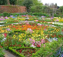 GARDEN FULL OF COLOURS by daisychain