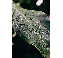 Green Leaf Raindrops Photographic Print