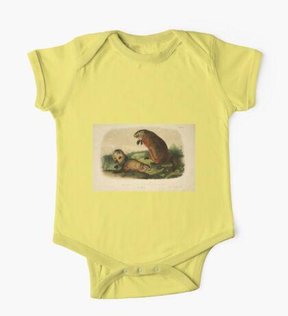 James Audubon - Quadrupeds of North America V1 1851-1854  Maryland Marmot Woodchuck Groundhog One Piece - Short Sleeve