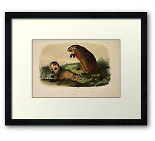 James Audubon - Quadrupeds of North America V1 1851-1854  Maryland Marmot Woodchuck Groundhog Framed Print
