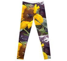 Bumble Bee on Half Eaten Sunflower Leggings