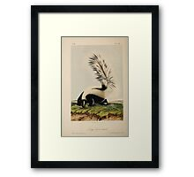 James Audubon - Quadrupeds of North America V3 1851-1854  Large Tailed Skunk Framed Print