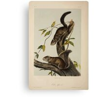 James Audubon - Quadrupeds of North America V3 1851-1854  Collies Squirrel Canvas Print
