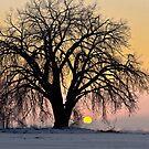 Cottonwood Cold Sunrise by nikongreg
