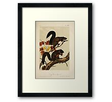 James Audubon - Quadrupeds of North America V1 1851-1854  Long Haired Squirrel Framed Print