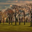 Grove of Trees by Sheryl Gerhard