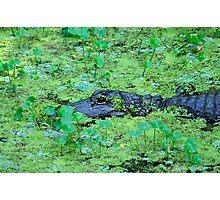 Swamp Thing Photographic Print