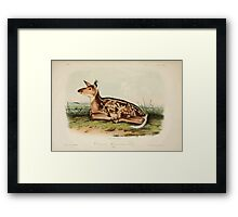 James Audubon - Quadrupeds of North America V2 1851-1854  Common American Deer Fawn Framed Print