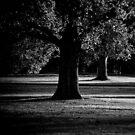 Shadow Dance  by Christine  Wilson Photography
