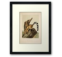 James Audubon - Quadrupeds of North America V2 1851-1854  Ring Tailed Bassaris Framed Print