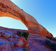 Wilson Arch by Dipali S