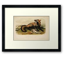 James Audubon - Quadrupeds of North America V1 1851-1854  American Cross Fox Framed Print