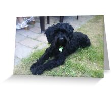 Special Schnoodle Greeting Card
