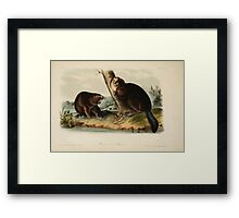 James Audubon - Quadrupeds of North America V1 1851-1854  American Beaver Framed Print