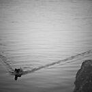 Streamline by Ryan Piercey