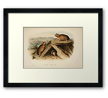 James Audubon - Quadrupeds of North America V2 1851-1854  Little Chief Hare Framed Print