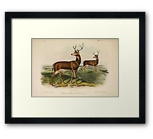 James Audubon - Quadrupeds of North America V3 1851-1854  Columbian Black Tailed Deer Framed Print