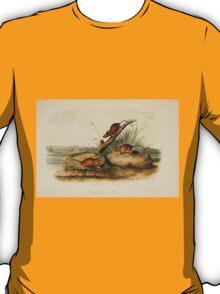 James Audubon - Quadrupeds of North America V2 1851-1854  Orange Colored Mouse T-Shirt