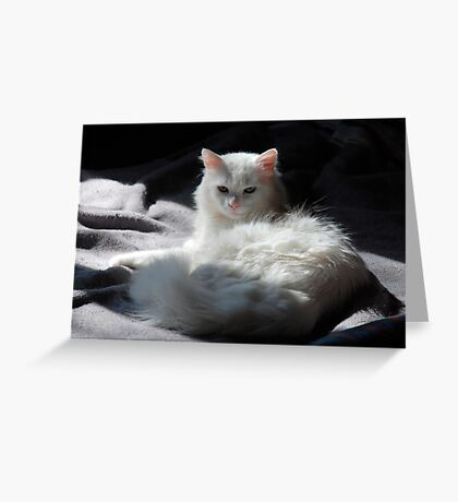 White Cat on Grey Blanket Greeting Card