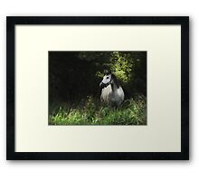 Horse in the meadow  Framed Print