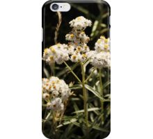 Western Pearly Everlasting iPhone Case/Skin