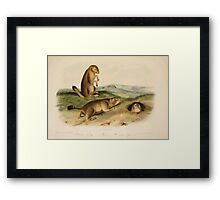 James Audubon - Quadrupeds of North America V2 1851-1854  Prarie Dog Prarie Marmot Squirrel Framed Print