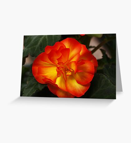 Orange Begonia Greeting Card