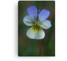 Wild flower in spring Canvas Print