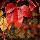 Leaves by Silvia Ganora