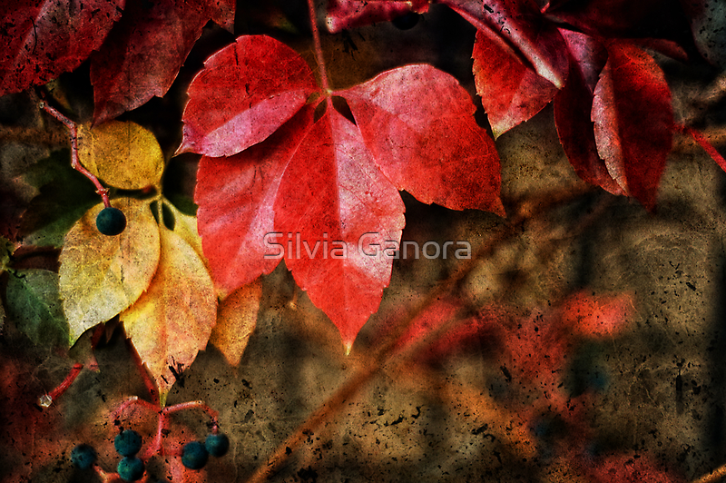 Leaves by Silvia Ganora
