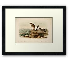 James Audubon - Quadrupeds of North America V3 1851-1854  Harris Marmot Squirrel, California Meadow Mouse Framed Print