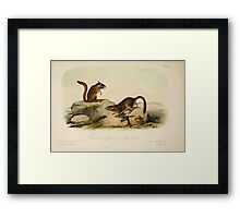 James Audubon - Quadrupeds of North America V1 1851-1854  Townsend's Ground Squirrel Framed Print