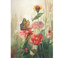 Zinnias with a Monarch Photographic Print