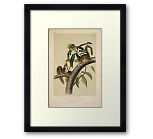 James Audubon - Quadrupeds of North America V1 1851-1854  Carolina Grey Squirrel Framed Print