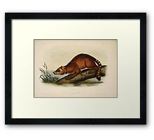 James Audubon - Quadrupeds of North America V3 1851-1854  Crab Eating Raccoon Framed Print