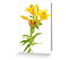 lilly bouquet Greeting Card