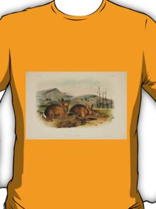 James Audubon - Quadrupeds of North America V3 1851-1854  Bachman's Hare T-Shirt