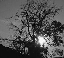 sombras by Pereyra