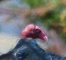 Vulture by KathleenRinker