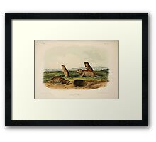James Audubon - Quadrupeds of North America V3 1851-1854  Camas Rat Framed Print
