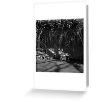 Bit o' root, riverbank erosion i - photograph Greeting Card