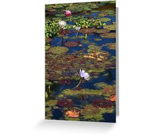 Colors at the Pond Greeting Card