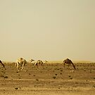 Crossing the Desert by Joseph Najm
