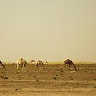 Crossing the Desert by Joseph Najm