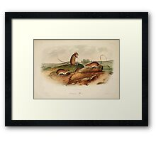 James Audubon - Quadrupeds of North America V2 1851-1854  Jumping Mouse Framed Print