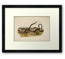 James Audubon - Quadrupeds of North America V2 1851-1854  Annulated Marmot Squirrel Framed Print